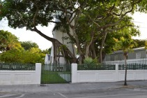 Banyan Tree (2)