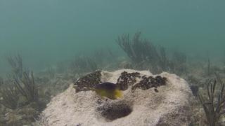 fish protecting sponge hideout