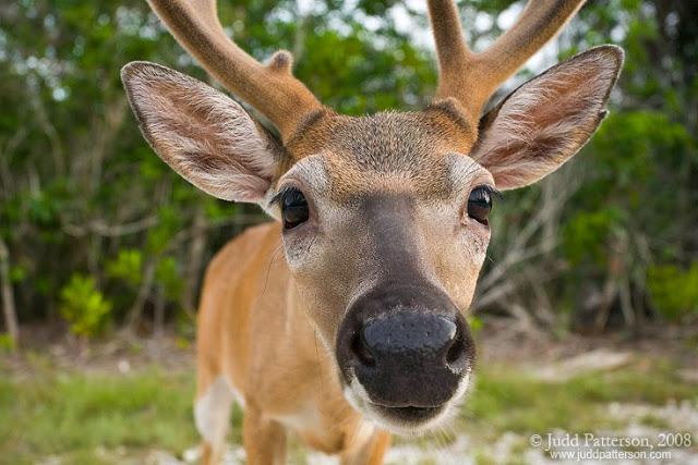 key_deer_5D_080720_5387
