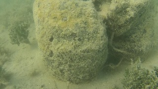 lobster with sponge species 2