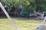 Mangrove Island (4)