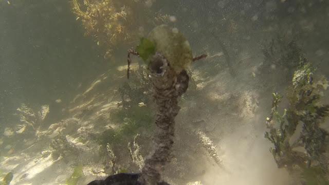 mangrove island polychaete tube